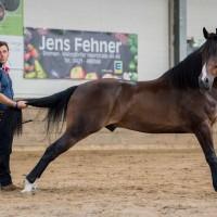 Мирон Бокочи (Miron Bococi) - фото 12113265_698571776946896_7107224546002638477_o-200x200, главная Разное , конный журнал EquiLIfe