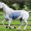 121206063133-equine-massage-respiratory-horizontal-large-gallery