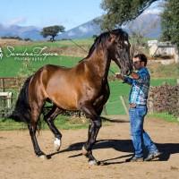 Мирон Бокочи (Miron Bococi) - фото 13083189_785849698219103_3047196568535243221_n-200x200, главная Разное , конный журнал EquiLIfe