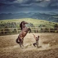Мирон Бокочи (Miron Bococi) - фото 13524347_816784571792282_7649172931636977231_n-200x200, главная Разное , конный журнал EquiLIfe