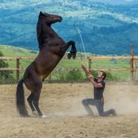 Мирон Бокочи (Miron Bococi) - фото 13533171_816784605125612_6479267917136709117_n-200x200, главная Разное , конный журнал EquiLIfe