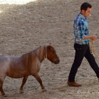 Мирон Бокочи (Miron Bococi) - фото 13626564_821451494658923_5064882061966304936_n-200x200, главная Разное , конный журнал EquiLIfe