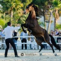 Мирон Бокочи (Miron Bococi) - фото 13669189_831435793660493_2127650352912005104_n-200x200, главная Разное , конный журнал EquiLIfe