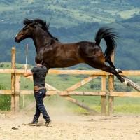 Мирон Бокочи (Miron Bococi) - фото 13680955_825100620960677_2014238133975133444_n-200x200, главная Разное , конный журнал EquiLIfe