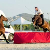 Мирон Бокочи (Miron Bococi) - фото 13710562_830866093717463_5658588301749935741_o-200x200, главная Разное , конный журнал EquiLIfe