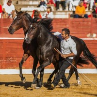 Мирон Бокочи (Miron Bococi) - фото 14358757_865275620276510_1218746855082173336_n-200x200, главная Разное , конный журнал EquiLIfe