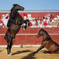 Мирон Бокочи (Miron Bococi) - фото 14369860_865275586943180_6986257045108868856_n-200x200, главная Разное , конный журнал EquiLIfe