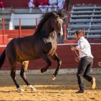 Мирон Бокочи (Miron Bococi) - фото 14495434_874166212720784_1504269977613900953_n-200x200, главная Разное , конный журнал EquiLIfe