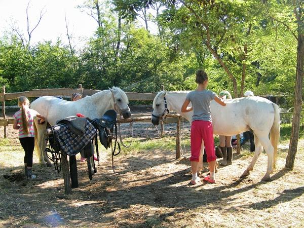Спортивная школа или частный прокат? - фото 2., главная Разное , конный журнал EquiLIfe