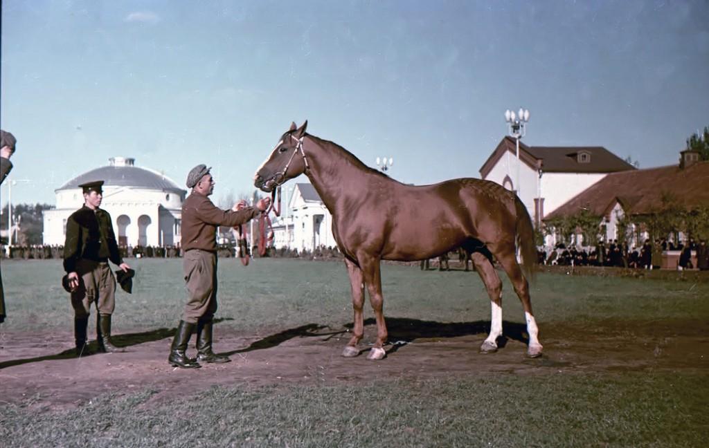 25-летний юбилей частного коневладения в России - фото 8ib9qquok4wh8nx6tk-1024x648, Разное , конный журнал EquiLIfe