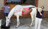 horses_inside_out2