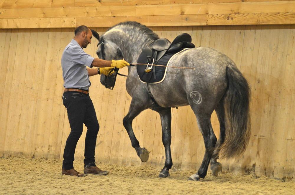 Занятия с Пауло Сержио - фото s6rY5Tq99mc, Новости , конный журнал EquiLIfe