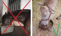 Почему лошадь должна есть с земли
