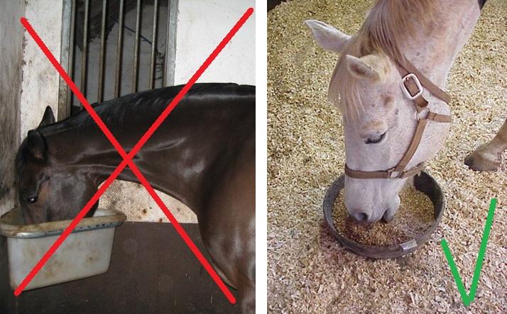 Почему лошадь должна есть с пола? - фото AAhorsefeeding, главная Здоровье лошади Рацион Содержание лошади , конный журнал EquiLIfe