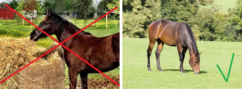 Почему лошадь должна есть с пола? - фото img_084222, главная Здоровье лошади Рацион Содержание лошади , конный журнал EquiLIfe
