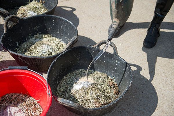 Почему лошадь должна есть с пола? - фото wetfeed, главная Здоровье лошади Рацион Содержание лошади , конный журнал EquiLIfe