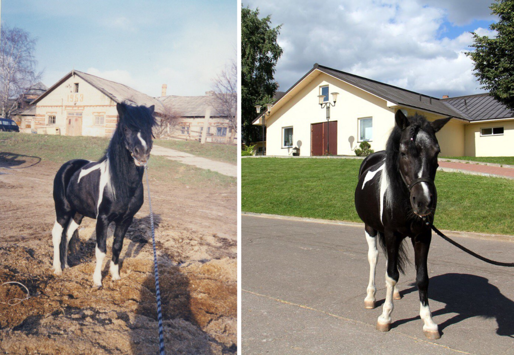 ВНИМАНИЕ, КОНКУРС! - фото youngme-1024x709, Разное , конный журнал EquiLIfe