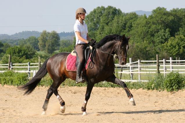 Как любителю не ошибиться с выбором тренера-берейтора? - фото 230659_1986848188976_7741220_n, главная Тренинг , конный журнал EquiLIfe
