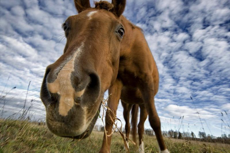 Занятия с лошадью. Если зашел в тупик, где найти силы, чтобы двигаться дальше? - фото 264754_kon_-morda_-krasota_3888x2592_www.GetBg_.net_, главная Поведение лошади Тренинг , конный журнал EquiLIfe