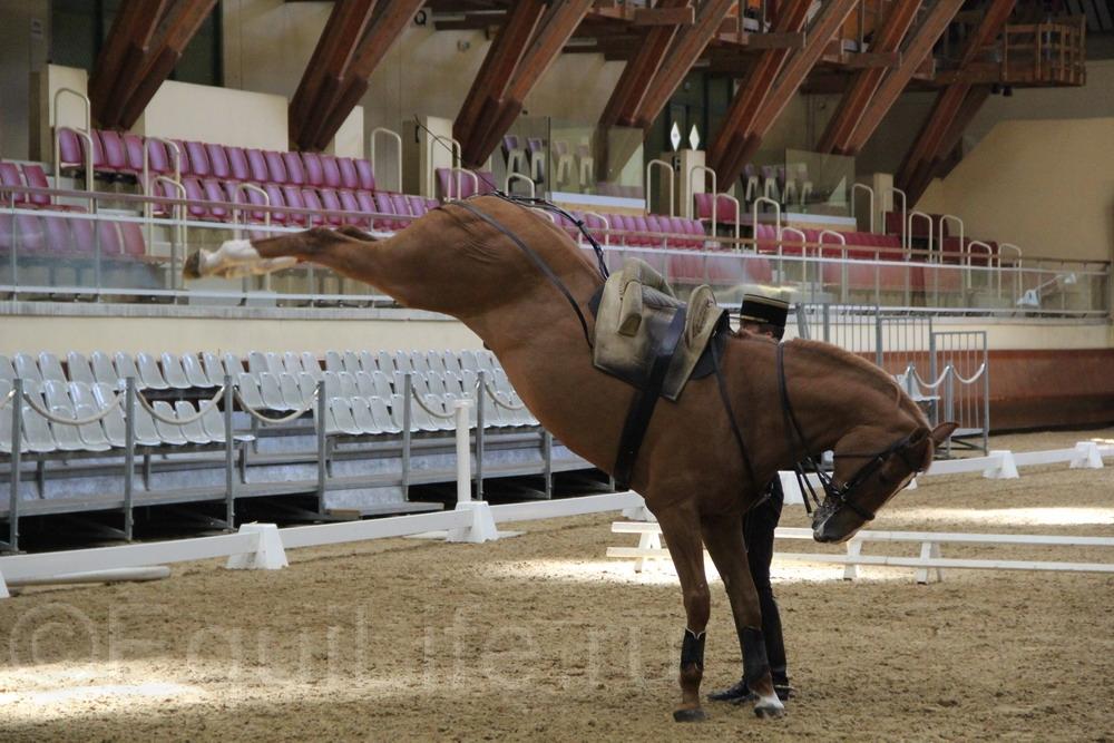 Интервью с главным всадником Cadre Noir полковником Patrick Teisserenc - фото IMG_0807_wm, главная Интервью , конный журнал EquiLIfe