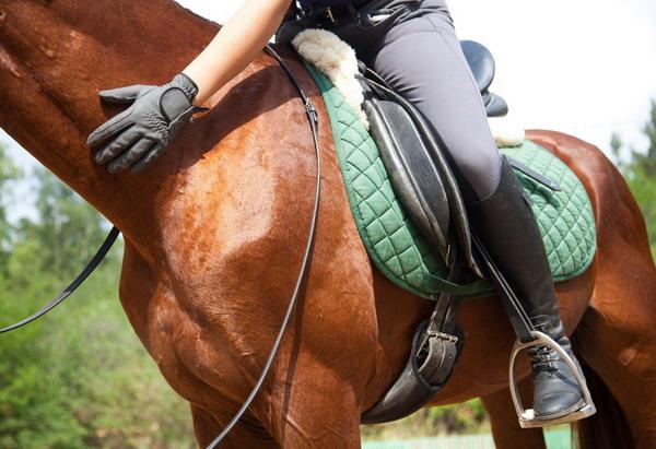 Не покидайте зону комфорта! - фото avalonosteopathicclinic_co_uk, главная Конные истории Тренинг , конный журнал EquiLIfe