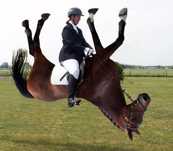 Не покидайте зону комфорта! - фото freakingnews_com, главная Конные истории Тренинг , конный журнал EquiLIfe