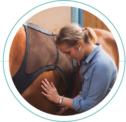 Здоровье лошади в смартфоне - фото marine, Здоровье лошади Новости , конный журнал EquiLIfe