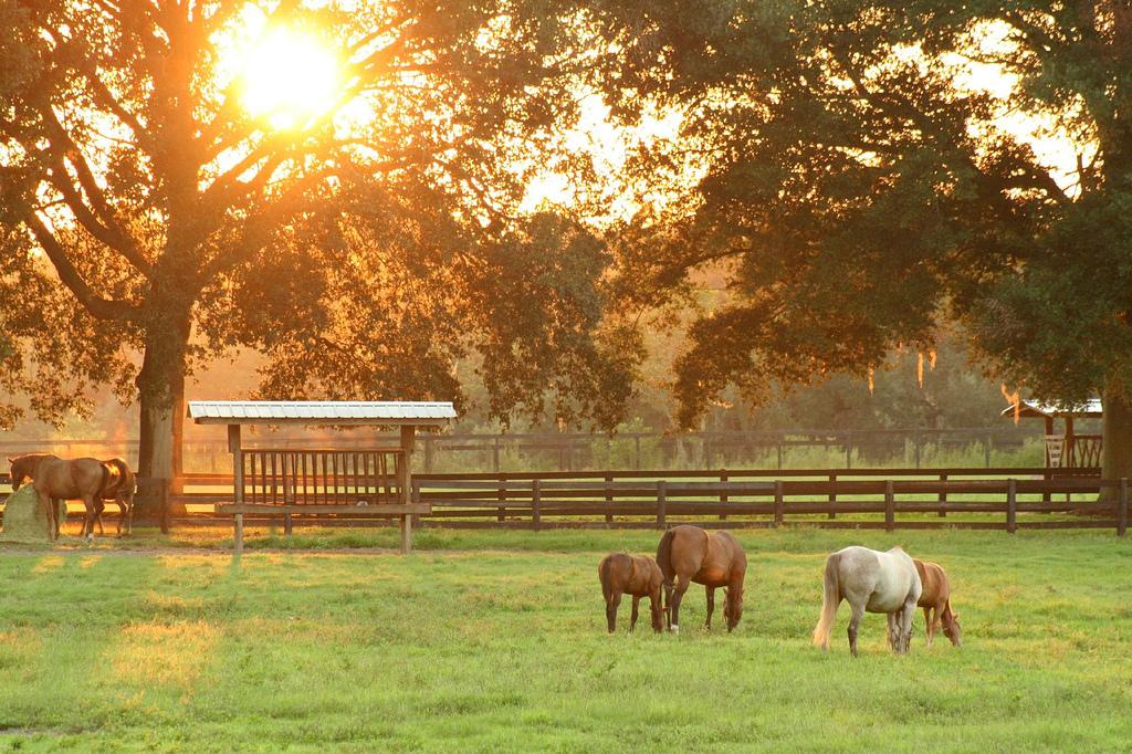 Весенний выпас с пользой - фото 237379957_3246174994_b, главная Разное , конный журнал EquiLIfe