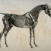 Художник Джордж Стаббс (1724—1806) - фото 5074163106740058-200x200, главная Фото , конный журнал EquiLIfe