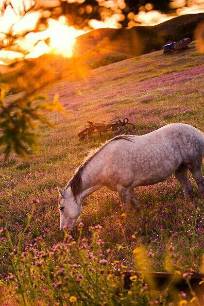 Весенний выпас с пользой - фото 64929a60d07453534a4e1e3c4276f6c7, главная Разное , конный журнал EquiLIfe