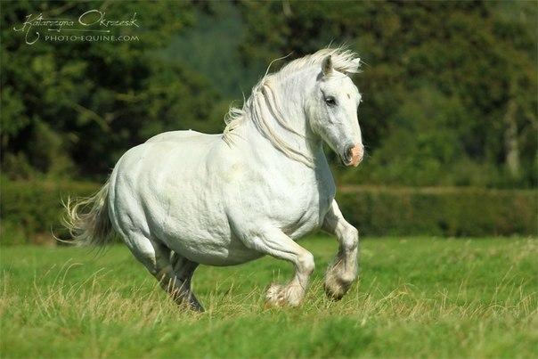 Как бороться с ожирением лошади - фото CHQDQjNypnE, главная Здоровье лошади Рацион Тренинг , конный журнал EquiLIfe