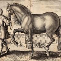Антуан де Плювинель де ла Бом (1555—1620) - фото Pluvinel-200x200, главная Конные истории Фото , конный журнал EquiLIfe