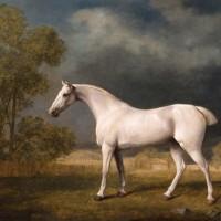Художник Джордж Стаббс (1724—1806) - фото Stubbs-White-Horse-200x200, главная Фото , конный журнал EquiLIfe