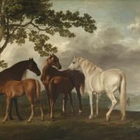 Художник Джордж Стаббс (1724—1806) - фото T00295_10-200x200, главная Фото , конный журнал EquiLIfe