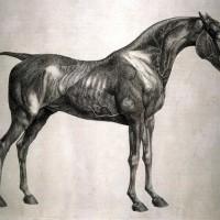 Художник Джордж Стаббс (1724—1806) - фото dea9295631d5fb069135ef2fe0de2603-200x200, главная Фото , конный журнал EquiLIfe