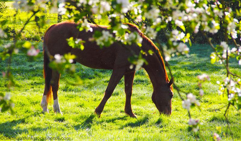 Весенний выпас с пользой - фото springtime-horse_800, главная Разное , конный журнал EquiLIfe