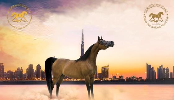 Dubai International Arabian Horse Championship - фото , Новости , конный журнал EquiLIfe