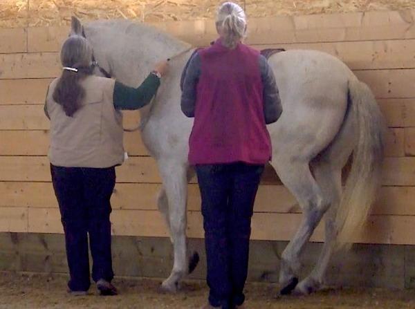 Интервью с Александрой Курланд (Alexandra Kurland) - пионером использования кликер-метода в тренинге лошадей - фото 6c1a0e920669c21a91c4e0989d95a392, главная Интервью Тренинг , конный журнал EquiLIfe