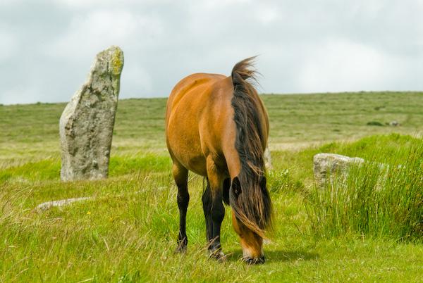 Основные кормовые средства для лошадей - фото Dartmoor-0871, главная Рацион , конный журнал EquiLIfe
