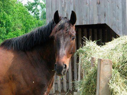 Основные кормовые средства для лошадей - фото addaef966566f33003e71f2a83718401, главная Рацион , конный журнал EquiLIfe