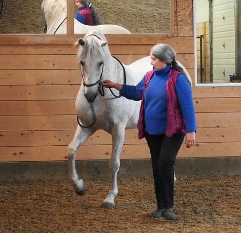 Интервью с Александрой Курланд (Alexandra Kurland) - пионером использования кликер-метода в тренинге лошадей - фото image, главная Интервью Тренинг , конный журнал EquiLIfe