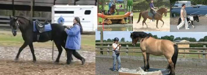 Интервью с Александрой Курланд (Alexandra Kurland) - пионером использования кликер-метода в тренинге лошадей - фото index-element31, главная Интервью Тренинг , конный журнал EquiLIfe