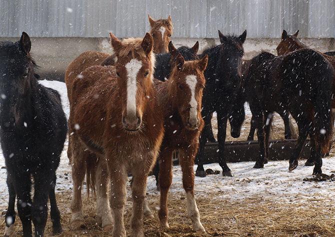 Бизнес на жалости - фото 2, главная Конные истории Разное Содержание лошади , конный журнал EquiLIfe
