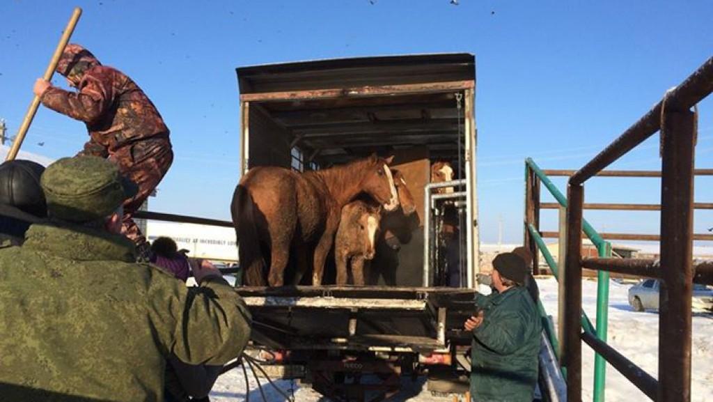 Бизнес на жалости - фото 3, главная Конные истории Разное Содержание лошади , конный журнал EquiLIfe