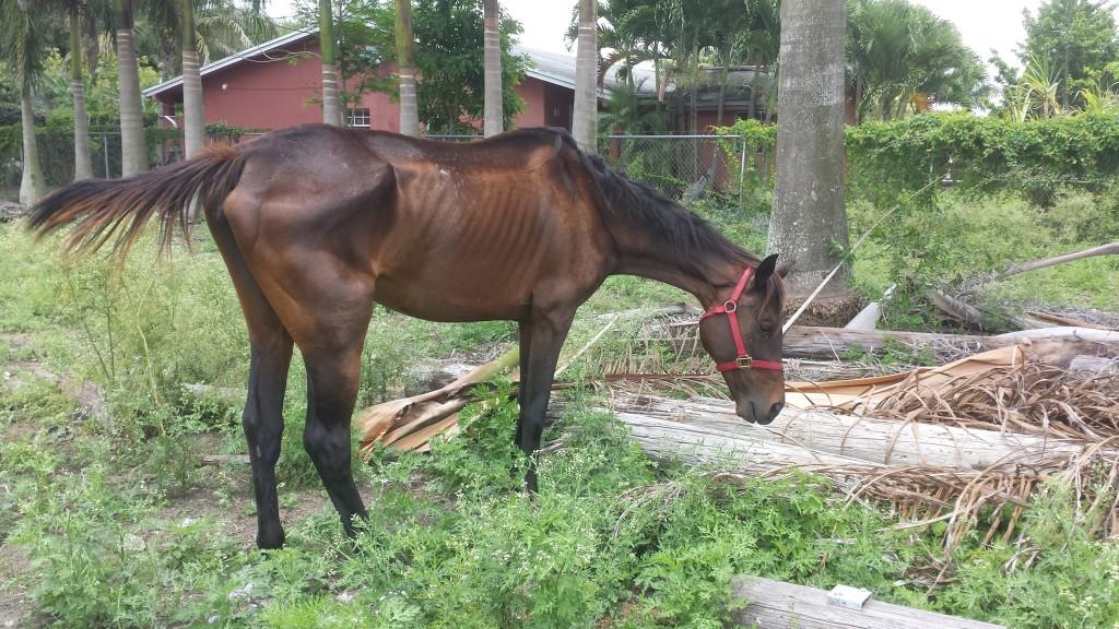 Бизнес на жалости - фото 20140601_133751-1024x576, главная Конные истории Разное Содержание лошади , конный журнал EquiLIfe