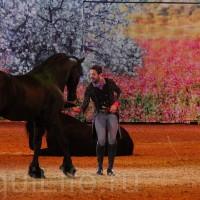 HOP TOP SHOW EQUITANA 2017 - фото IMG_1638_wm_resize-200x200, главная События Фото , конный журнал EquiLIfe