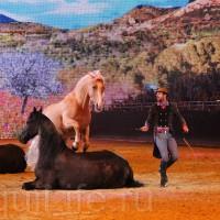HOP TOP SHOW EQUITANA 2017 - фото IMG_1646_wm_resize-200x200, главная События Фото , конный журнал EquiLIfe