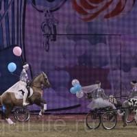 HOP TOP SHOW EQUITANA 2017 - фото IMG_1708_wm_resize-200x200, главная События Фото , конный журнал EquiLIfe