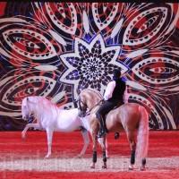 HOP TOP SHOW EQUITANA 2017 - фото IMG_1816_wm_resize-200x200, главная События Фото , конный журнал EquiLIfe