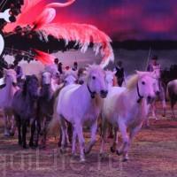 HOP TOP SHOW EQUITANA 2017 - фото IMG_2071_wm_resize-200x200, главная События Фото , конный журнал EquiLIfe